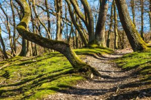 Barfuss Themen - Waldweg